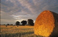 Straw bale at sunset, Norfolk, England